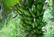 Zoete verleiding: Balinese banana-pancakes