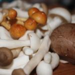 Ragout van verse paddenstoelen