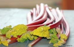Verse Rabarber; de fruitige smaak van het voorjaar