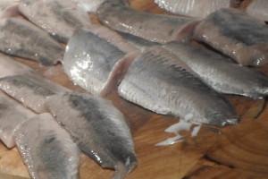 Haringweetjes van vangst tot consumptie