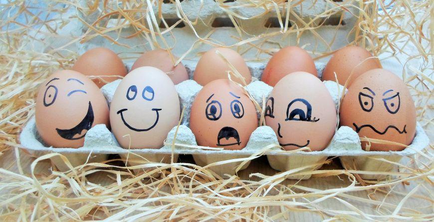 Mini cursus; Herken een ei