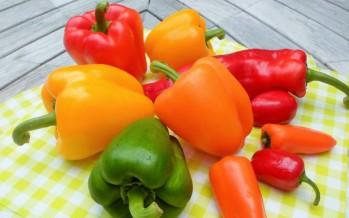 Paprika de kleurrijke topper