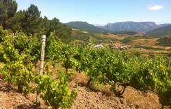Wijn en klimaat twee handen op een buik