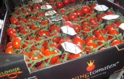 Actueel; Russische boycot raakt voedselproducenten hard