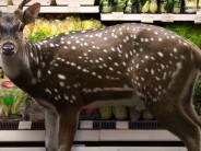 Wild uit supermarkt is vaak helemaal niet wild