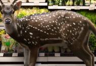 Wild uit supermarkt
