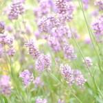 Lekker Tafelen ontdekt voor u: de Provence