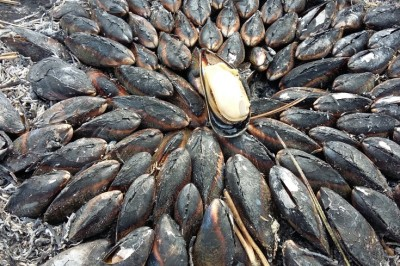 Poitou Charentes mosselen églade chez memelou