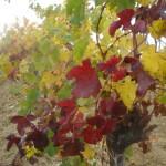 Liveblog: wandelen door de wijngaarden