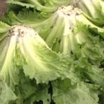 Bladgroenten; Kies voor meer blaadjes in je eten